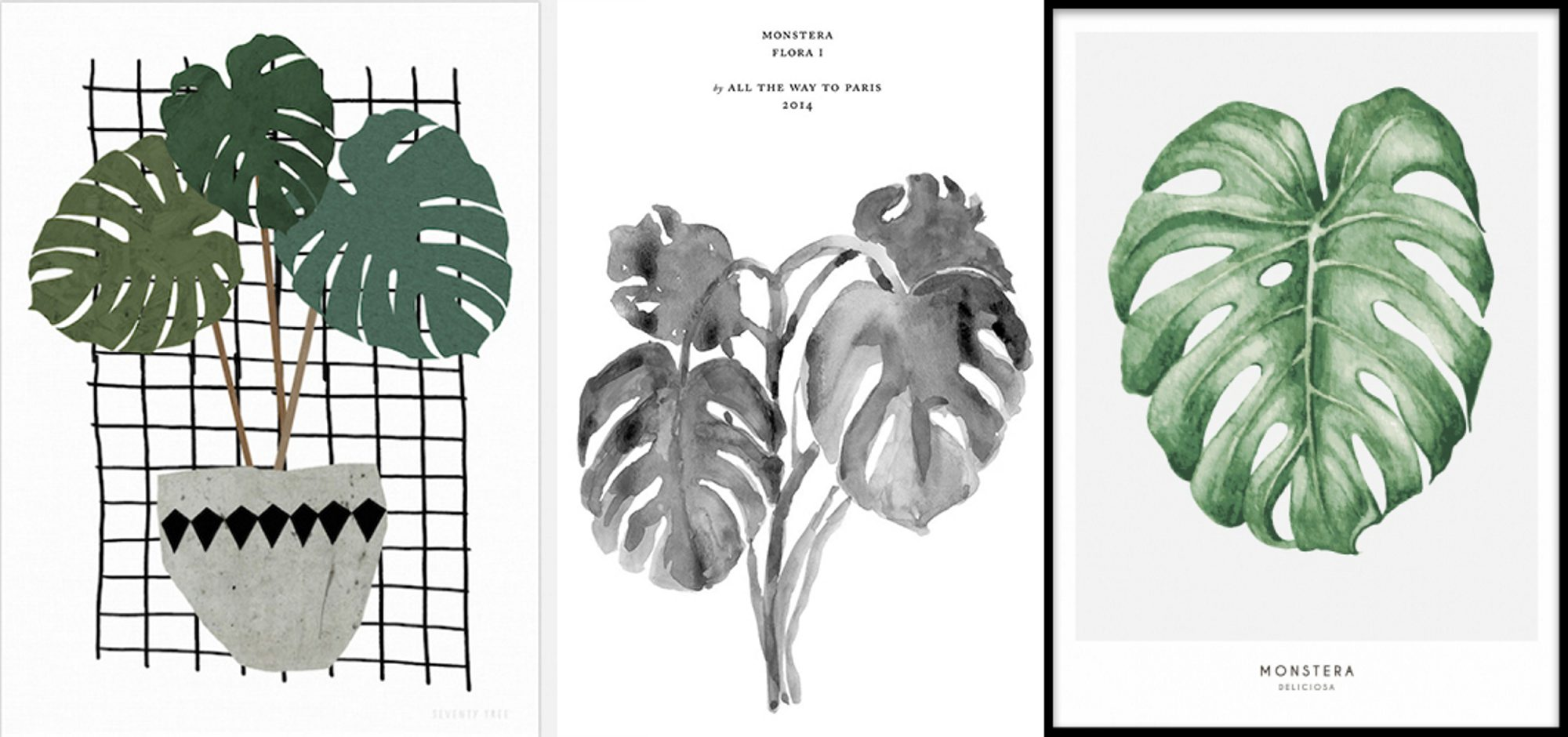 Monstera plante grønn trend