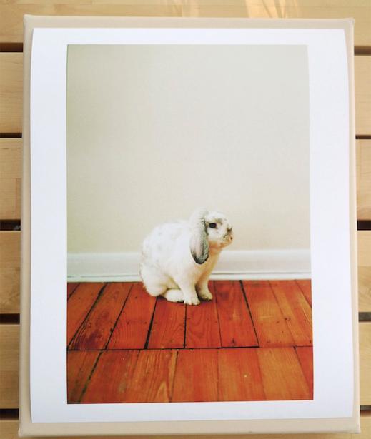 30x35cm kr 340 Bunny debbiecarlos.com ubegrenset opplag signer av artisten